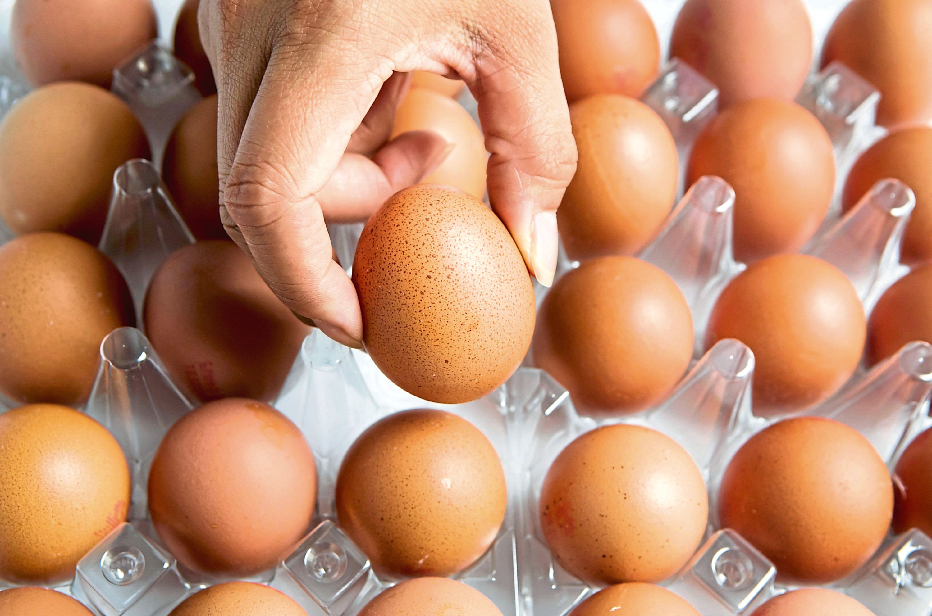 Industry leaders want consumers to move away from their obsession with large eggs.