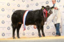 Ally Fraser, Easter Clune, Lethen, has competed for 15 years and ruled supreme with a black Limousin cross heifer