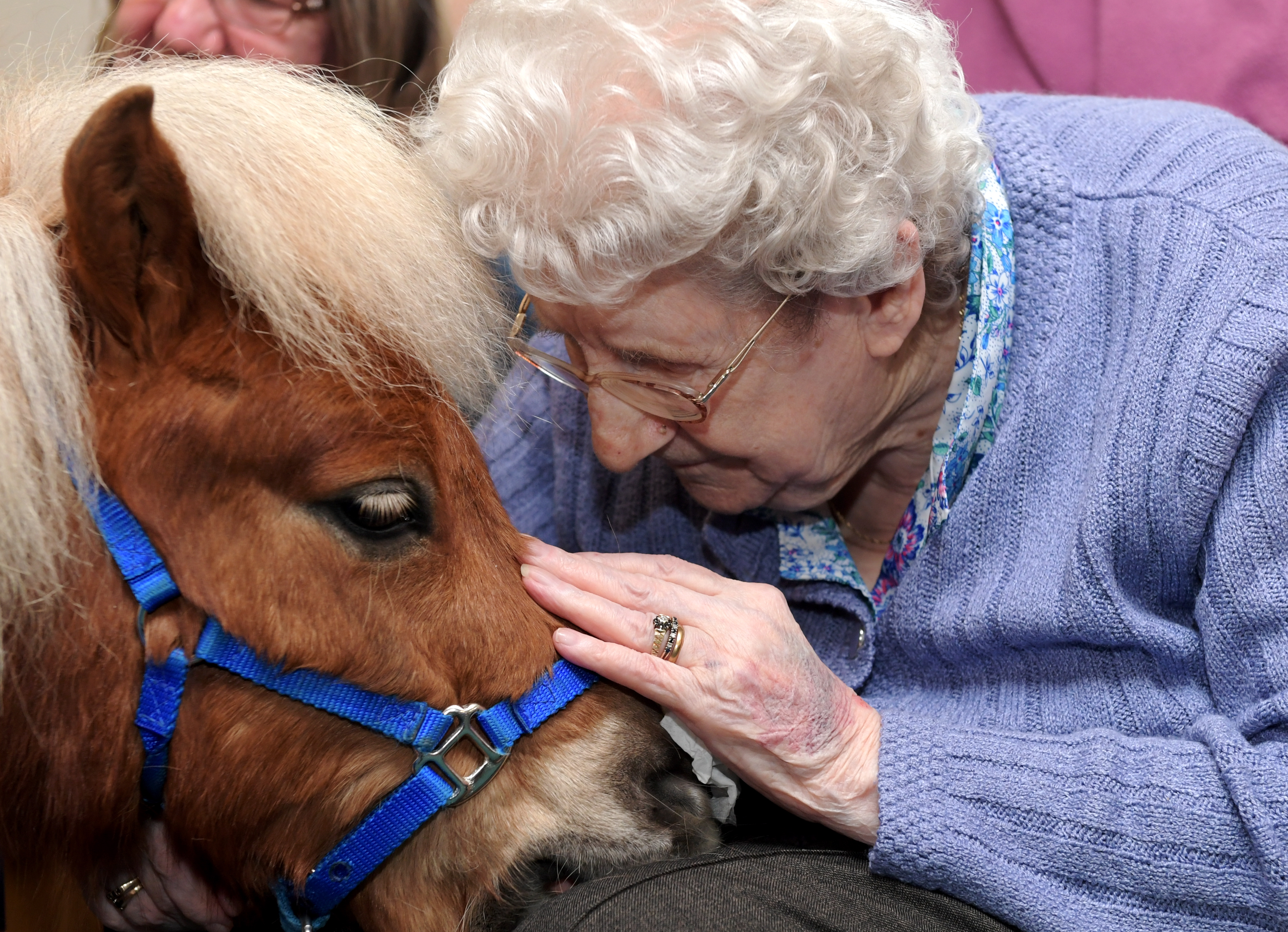Residents at Hanover Court sheltered housing in Inverbervie were visited by therapet Shetland ponies provided by Therapy Ponies Scotland. Pictured is 92 yr old Doris Paton with Flicker.