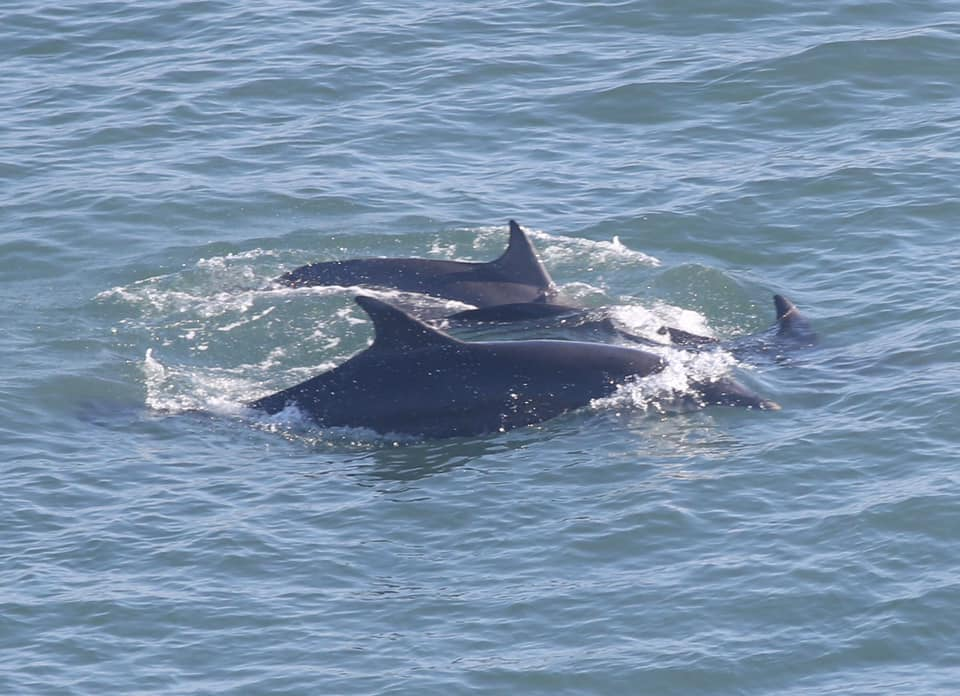 The Moray Firth dolphins were spotted off Flamborough Head in Yorkshire.