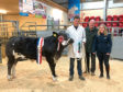 David Dingwall with his overall champion animal which sold for £1,200, pictured with the judge Jock McCallum, Mountrich, Dingwall, and Mary-Jo Grant of sponsors, Conanvet.