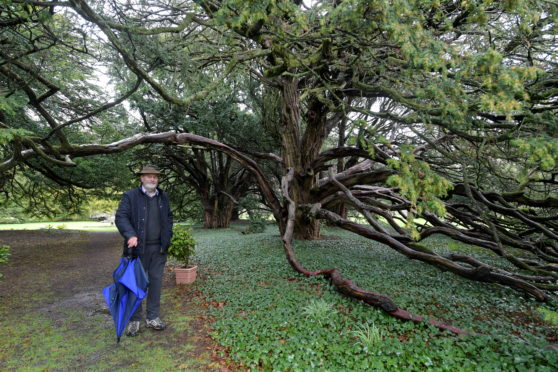A planning application has been approved for a car park and toilets at Ellon Castle gardens. Alan Cameron is pictured beside the English Ewe trees, there are 16 trees and they are believed to be the biggest collection of English Ewe Trees in Northern Europe.