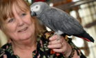 Maggie Packer pictured with Luke, an African Grey Congo.
