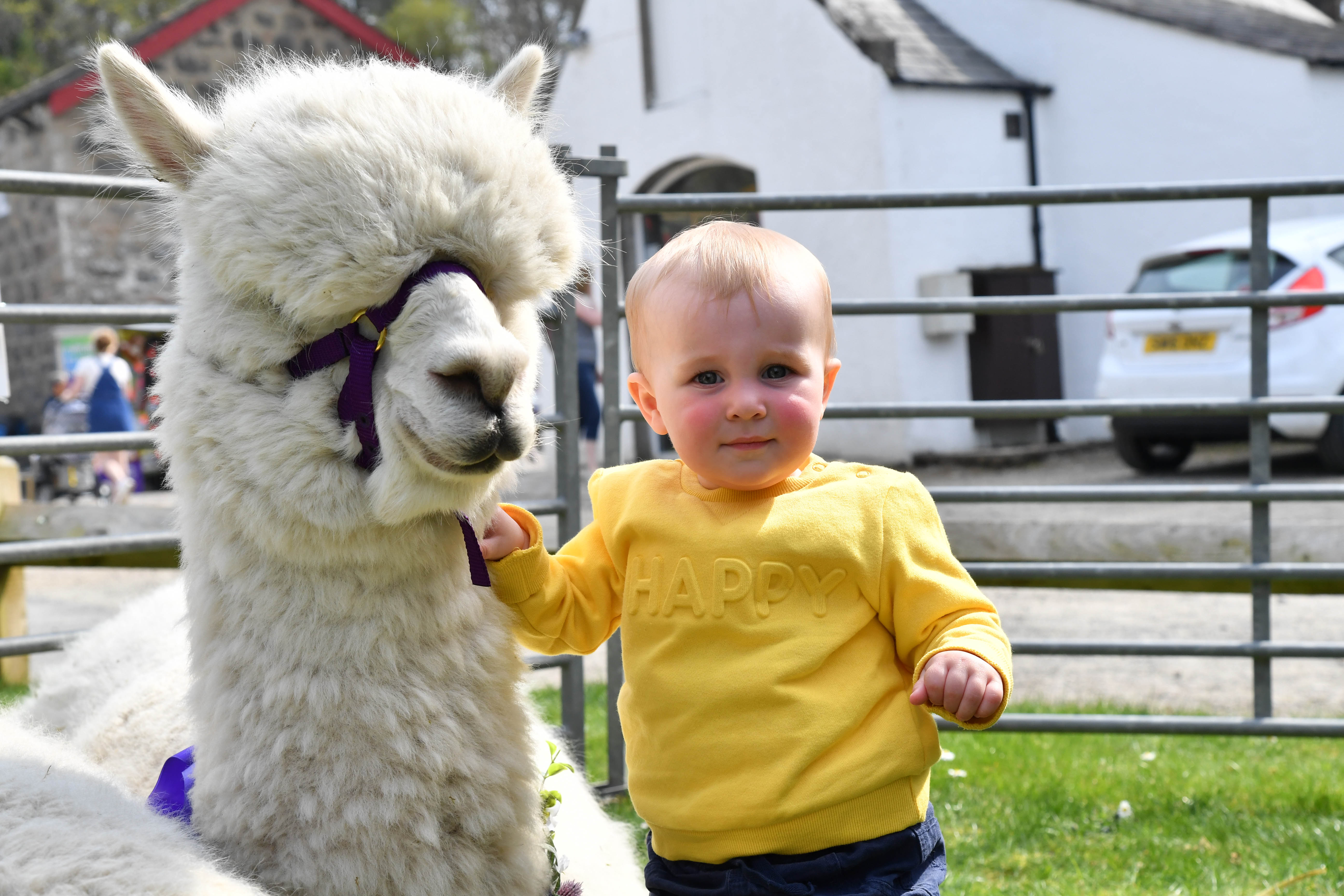 Lewis Milton, 1, from Peterhead makes friends with an alcapa from Balmedie based Highland alcapas..