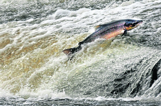Marine Scotland data revealed that salmon catches have dropped to their lowest level since records began in 1952.