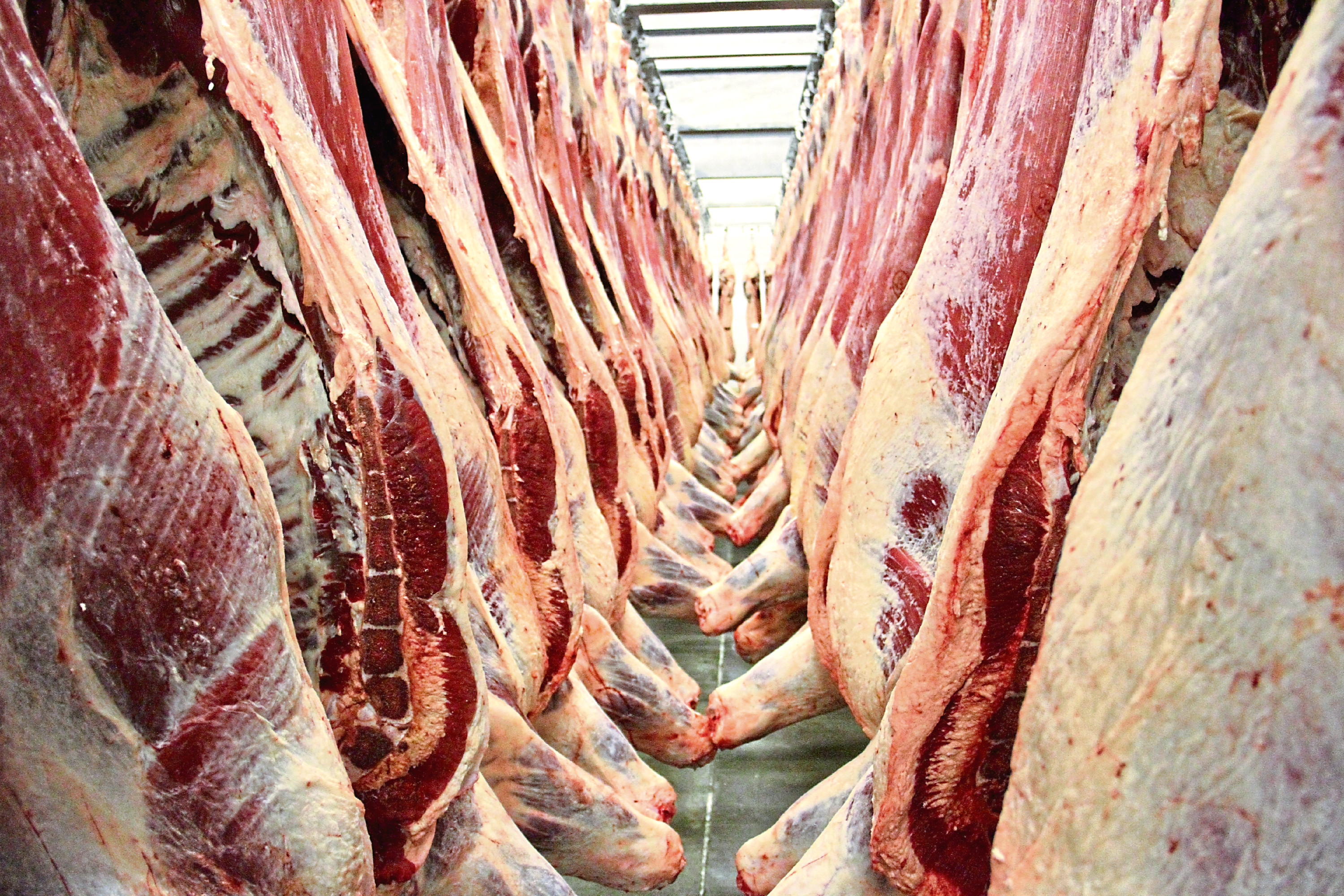 Scotch Beef carcases