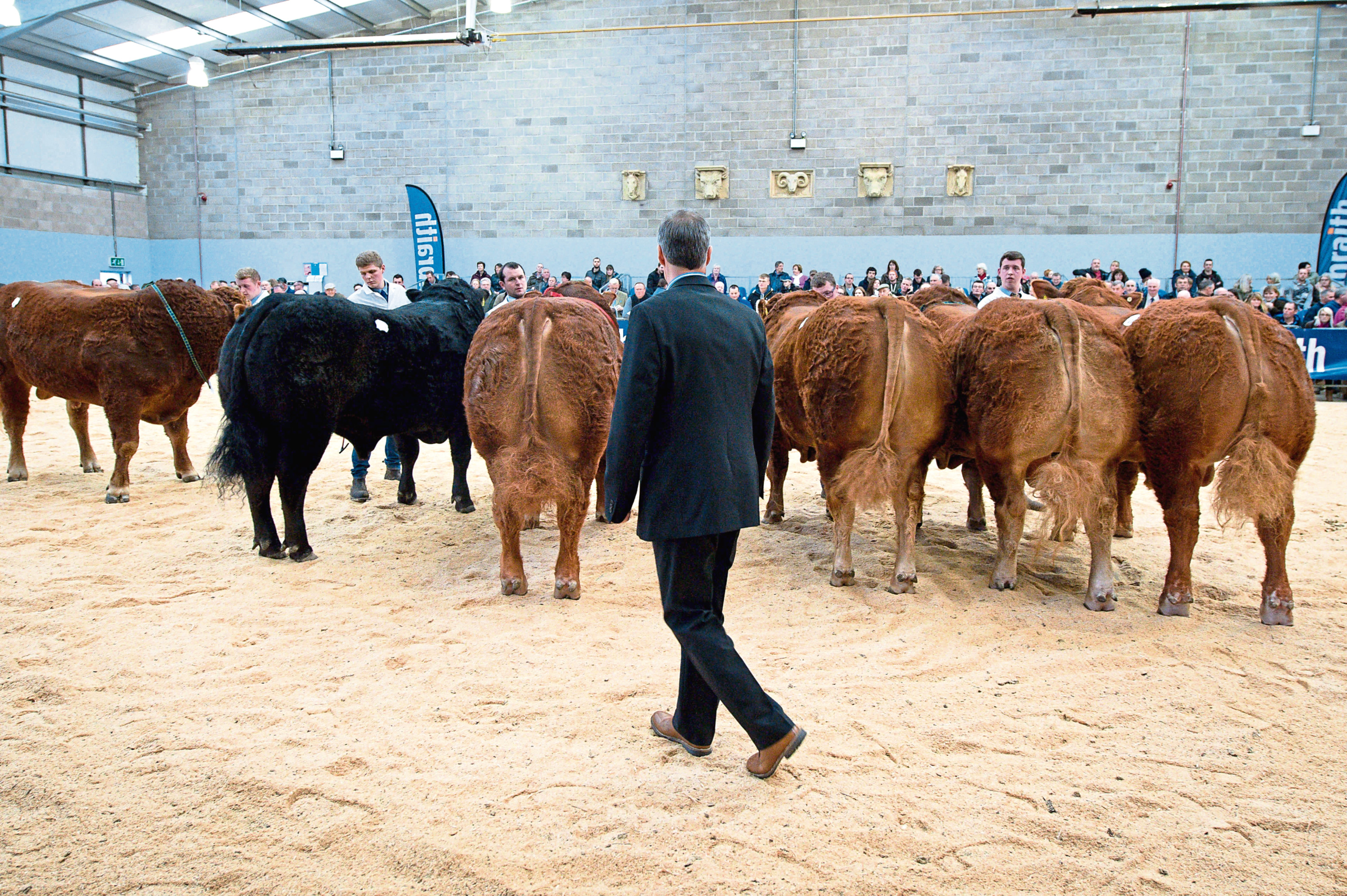 Passports for a number of Limousin bulls have been withdrawn.
