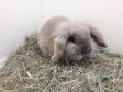 Bernie the rabbit