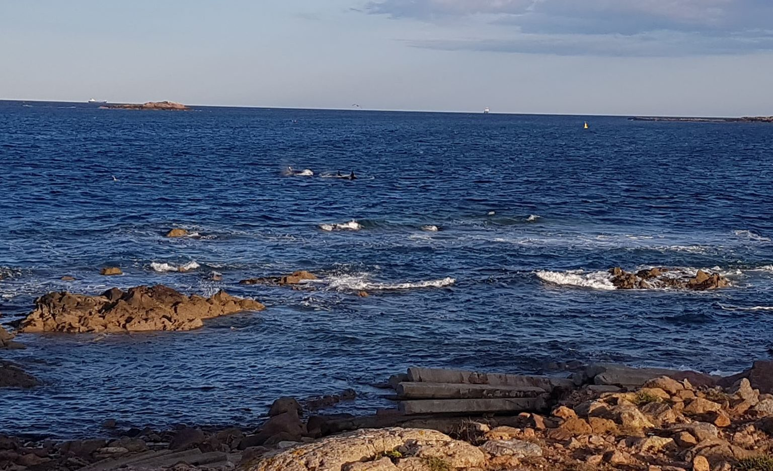 While rock-pooling near Peterhead Harbour marine biology student Chloe Fraser spotted three orcas