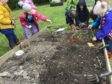 Fyvie Primary pupils learning how to take care of plants