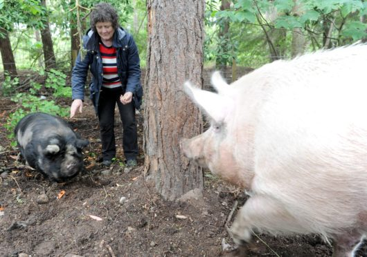 Iona Nicol of the Munlochy Animal Aid  with the new residents. Picture by Sandy McCook