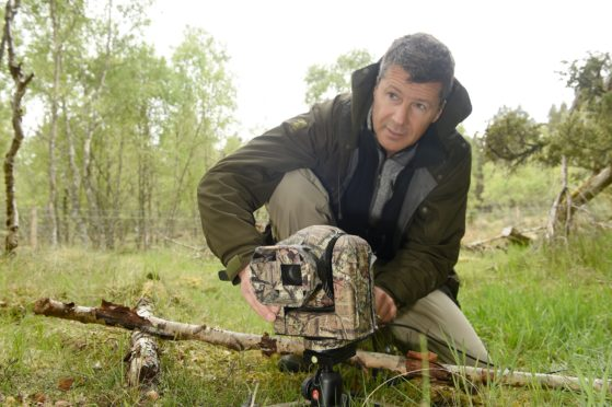 Nigel Bean , a specialist wildlife cameraman with the Springwatch production close to a nest in Aberenethy Forest, Nethy Bridge. Picture by Sandy McCook