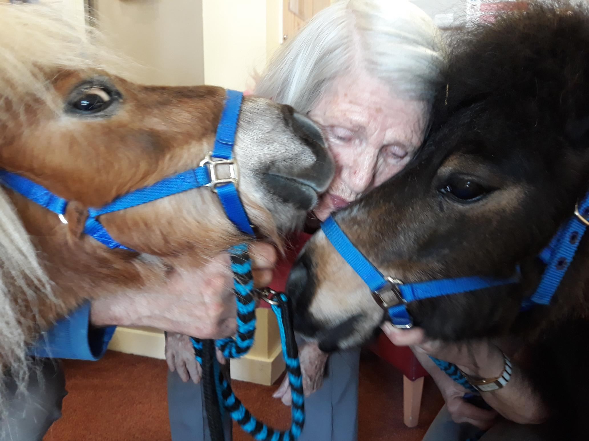 The ponies delighted residents at Grove Care Home.