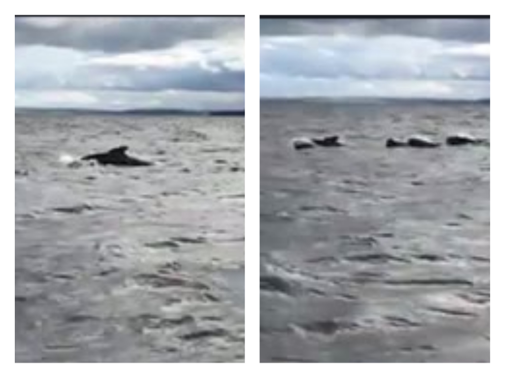 Screengrabs from the video by Emma Neave-Webb.