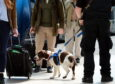 Police sniffer dogs at Aberdeen Railway Station.