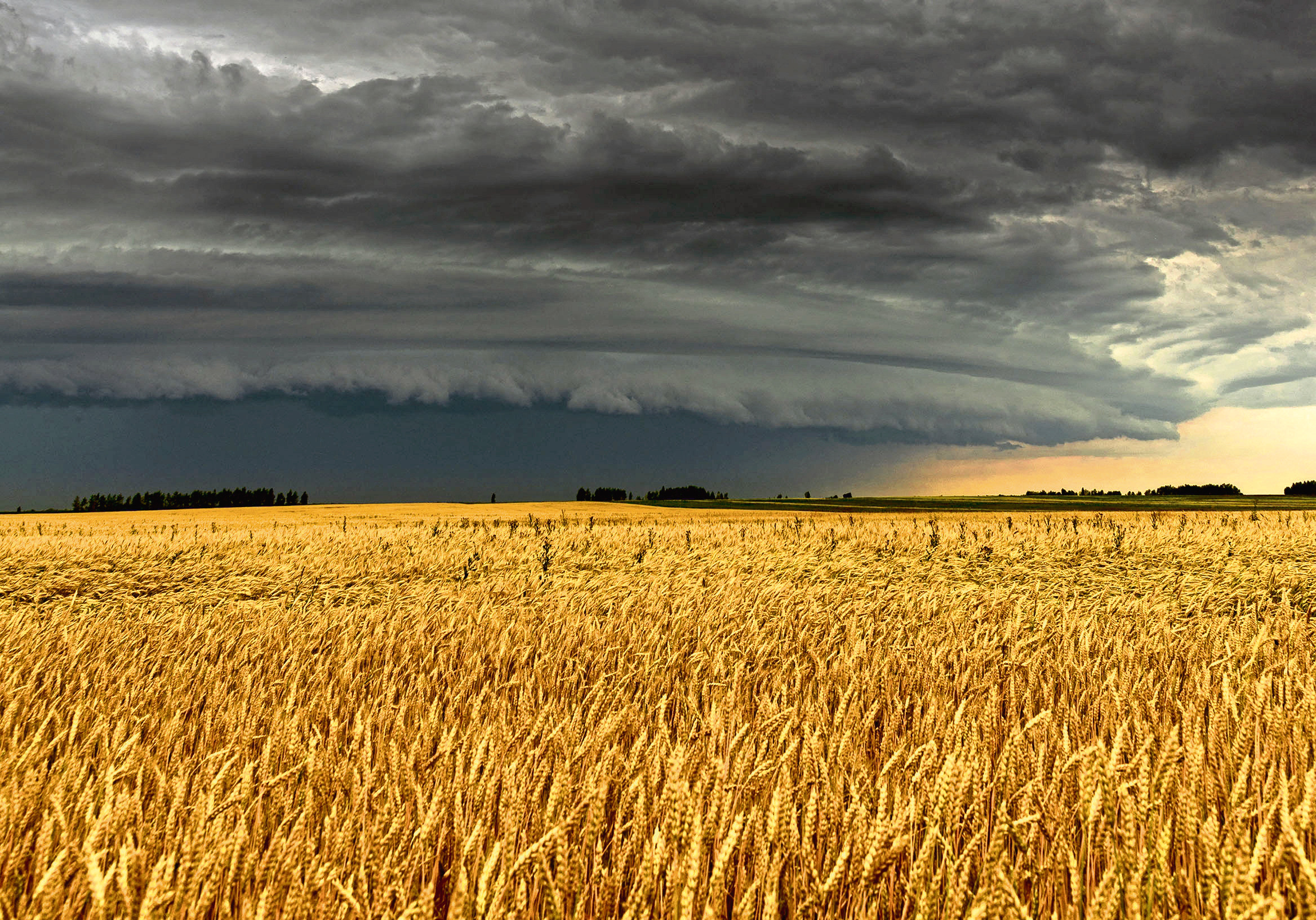 Picture for crop insurance story