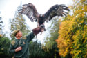 Visitors can handle a bird during the falconry lesson