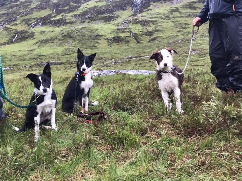 Search and rescue dogs Gwen, Daisy and Meg in Glencoe.