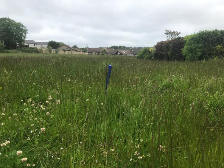 Overgrown grass in the cove area