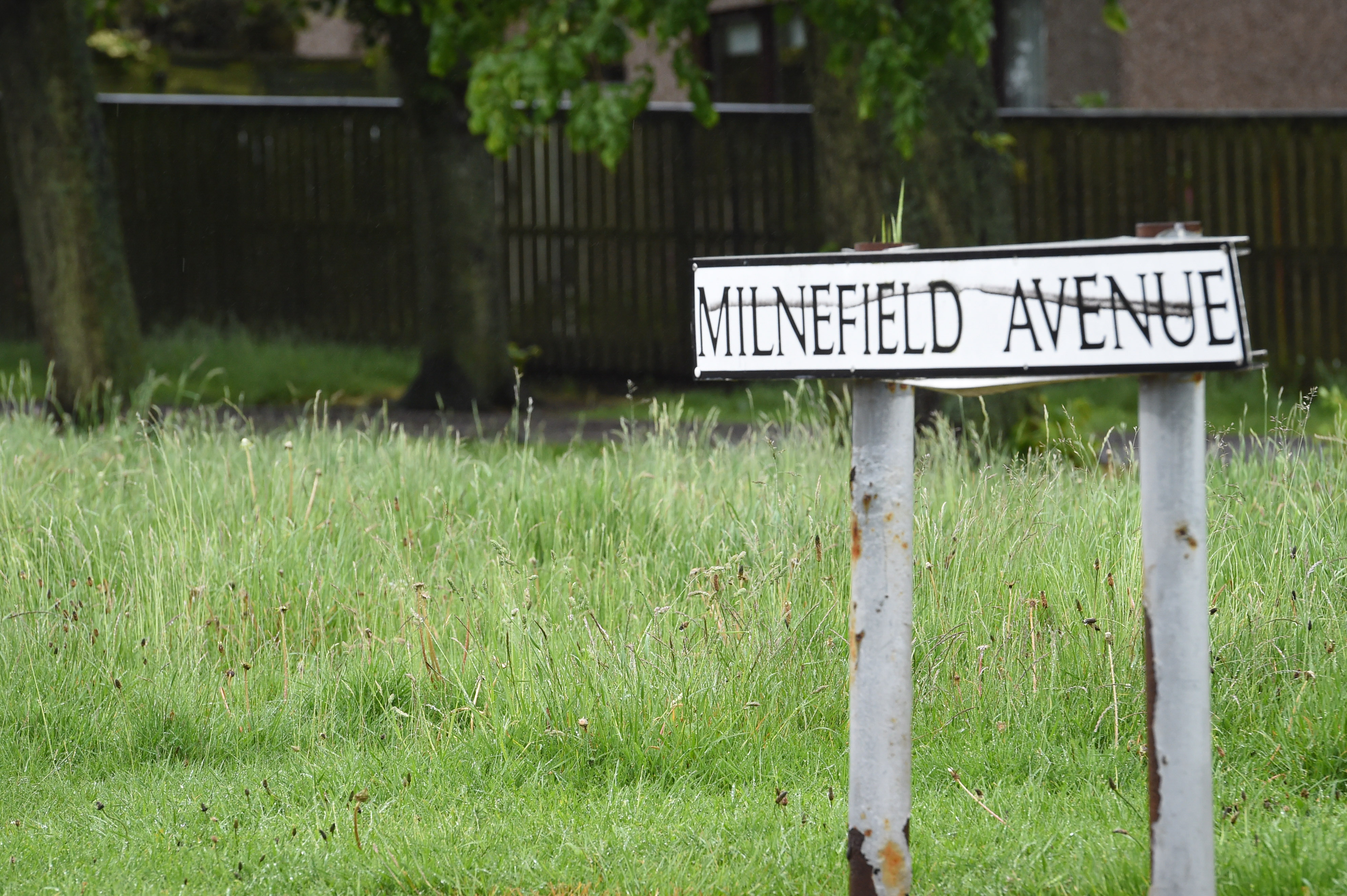 Pictures by JASON HEDGES      Pictures show overgrown public grass areas in Moray today.  Picture: Milnefield, New Elgin  Pictures by JASON HEDGES