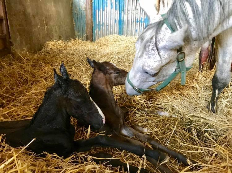 My Cashel Eile with her two foals.