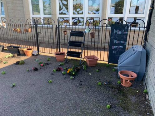 The plants kicked about by vandals at Mintlaw Primary School