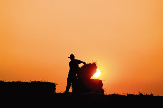 There were 32 deaths in the agriculture, forestry and fisheries sector last year.    thinkstock