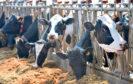Rora Dairy, Middleton of Rora Farm, Longside, Peterhead, the farm of Bruce and Jane Mackie.