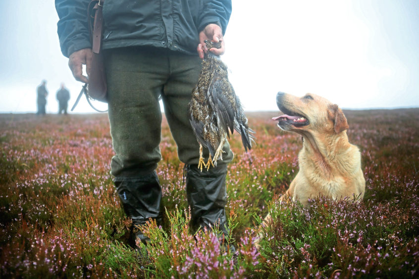 Plan to reforest grouse moors