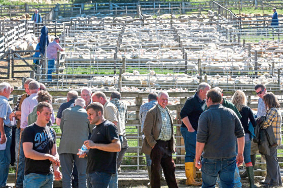 Buyers and sellers at next month's Lairg Lamb Sales will be worried about a potential no-deal Brexit.