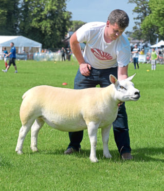 Richard Reynolds is pictured with Kenny Pratt's Texel gimmer which stood champion of champions.
