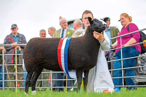 The Zwartbles, overall sheep and overall show champion of champions sheep from the Sharp brothers.