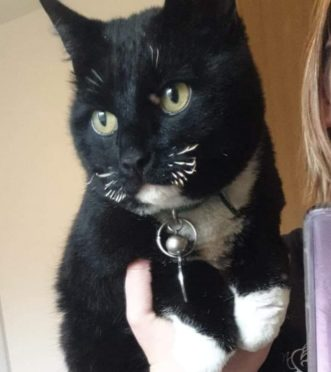 Borris the cat, who is suffering after his whiskers were burned off