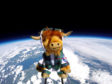 The Highland cow in space