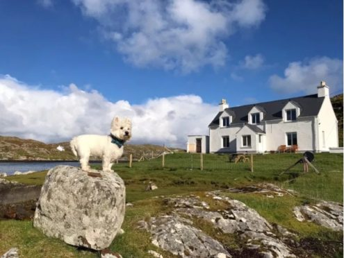 Credit: 'The Wee White Dug'