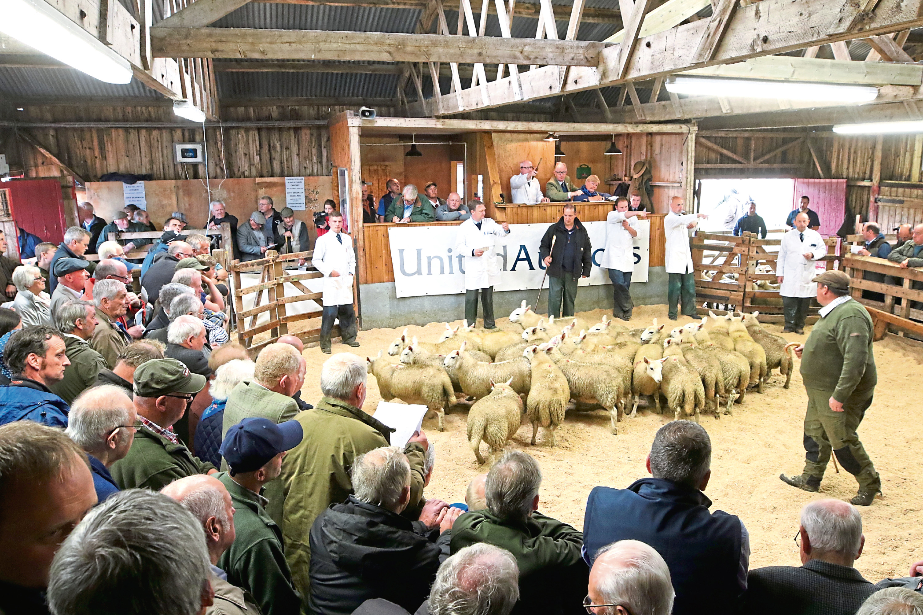 More than 13,000 lambs went under the hammer at the iconic sale.