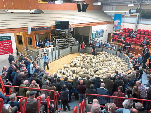Sheep trade has improved in the past week.