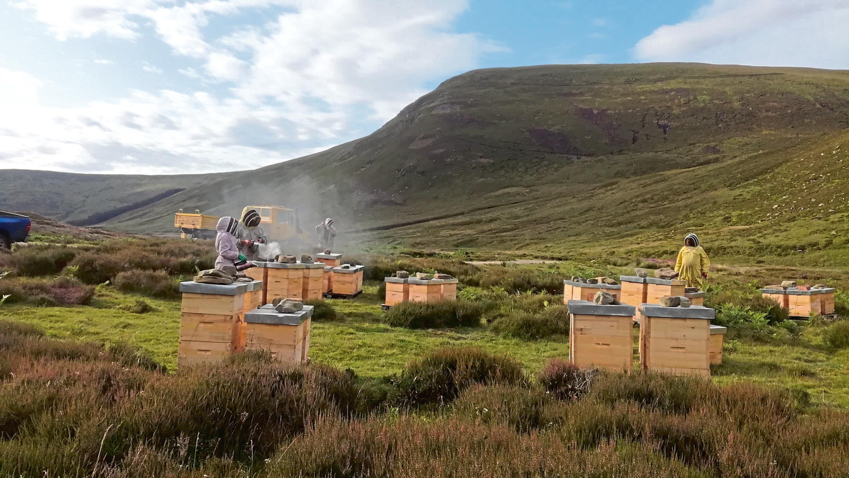 Murray MacGregor has around 4,000 hives.