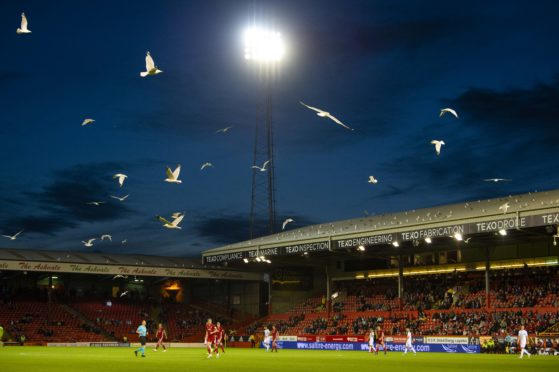 Gulls descend onto the pitch during last night's match.