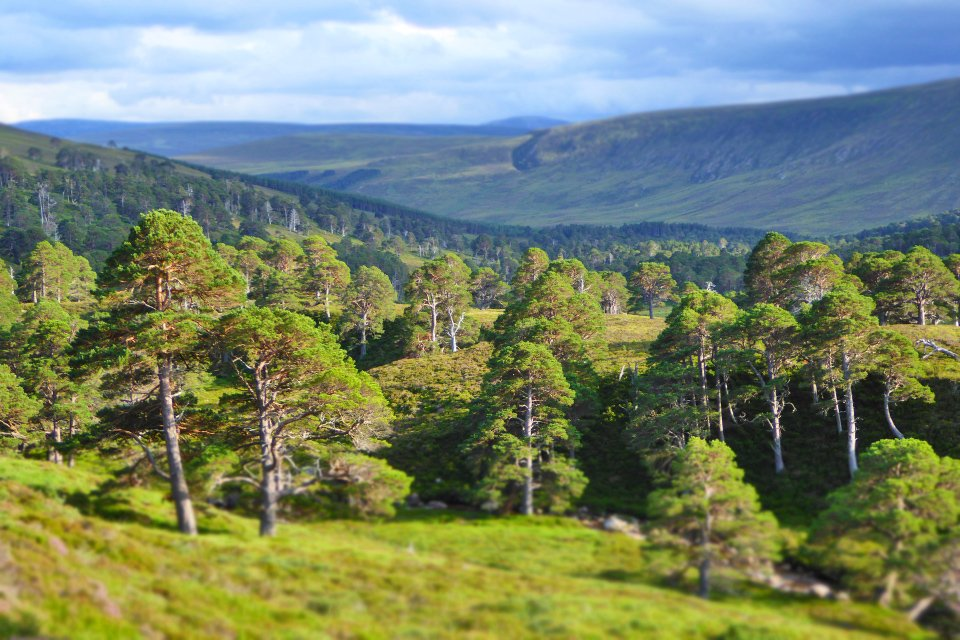 A beautiful evening in Glen Derry in the Cairngorms.