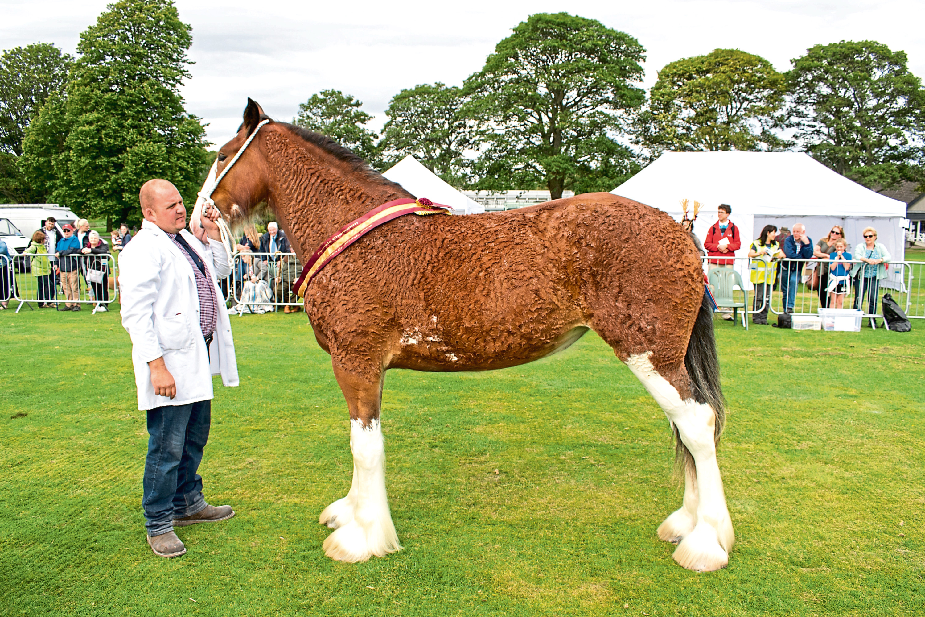 Muirton Belle with owner Blair Warburton of Forfar. Photo by kind permission of Tahr Media.