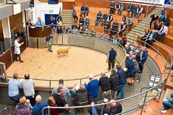 Beltex males and females met a sound demand at Lanark.