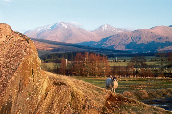 The SRUC Kirkton and Auchtertyre research farms