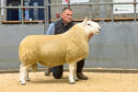 Johnnie Campbell, with the top price North Country Cheviot ram.