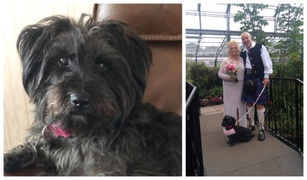 Scottie-Lhasa Apso cross Coco led Carol Gray down the aisle as she married husband Ally last month.