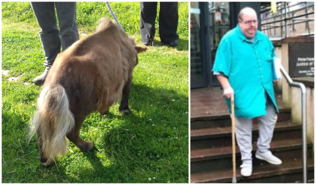 Itsy the Shetland pony was neglected by Gary Stevens