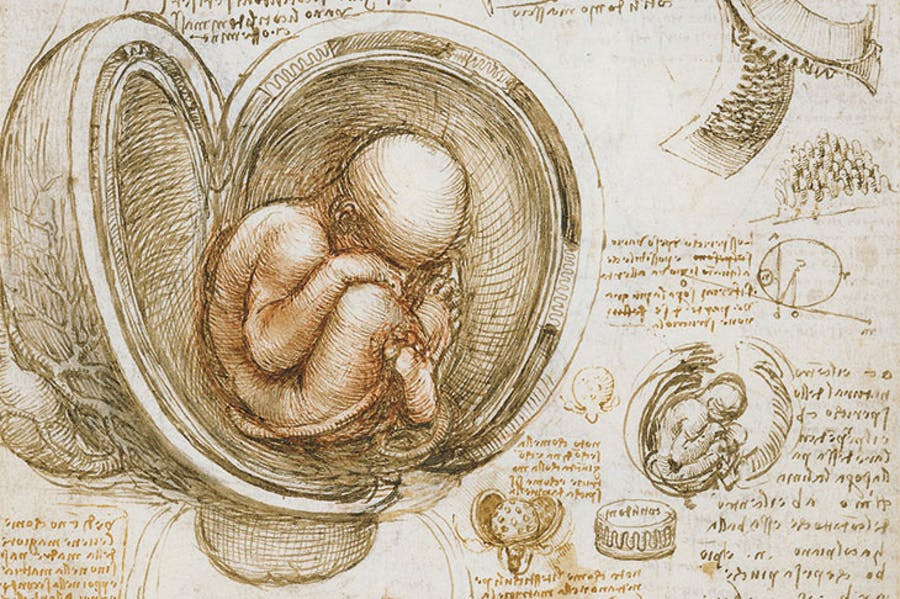 The fetus in the womb (c. 1511), Leonardo da Vinci. Photo: Royal Collection Trust; © Her Majesty Queen Elizabeth II 2019
