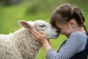Ailish Martin, 9 is so happy to see Effie the sheep again. Pictures by JASON HEDGES