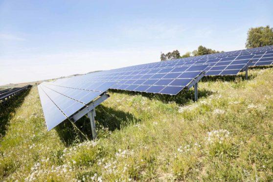 Solar panels and plants.