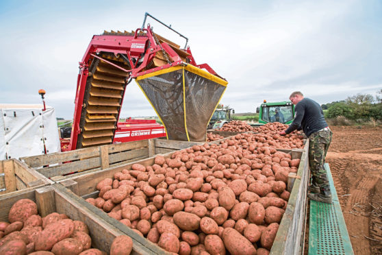 The compost could help potato growers deal with PCN.